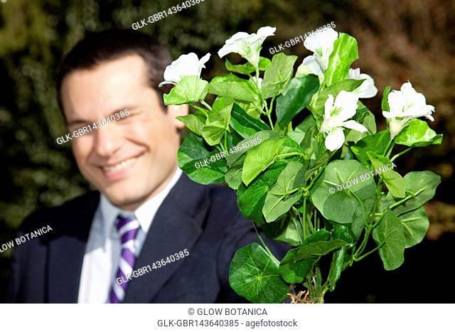 Businessman holding a potted plant