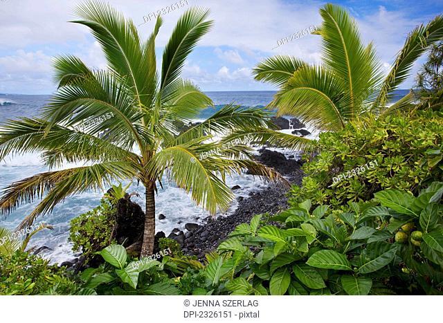 Palm trees and waves crashing into the shore along the coast;Hana maui hawaii united states of america
