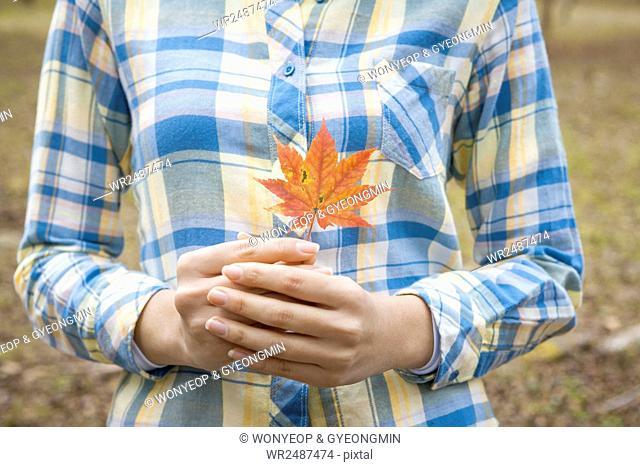 Woman's hands holding a fallen leaf