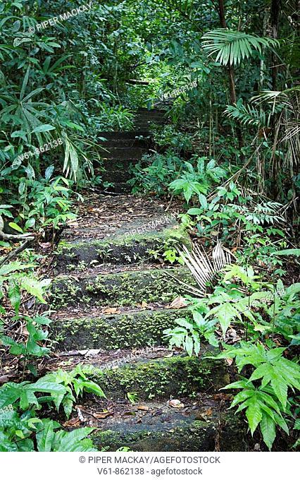Rainforest, Panama