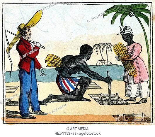 'Planting', 1826. Black slaves working planting sugar cane. The man is kneeling and planting the cane which the woman brings to him