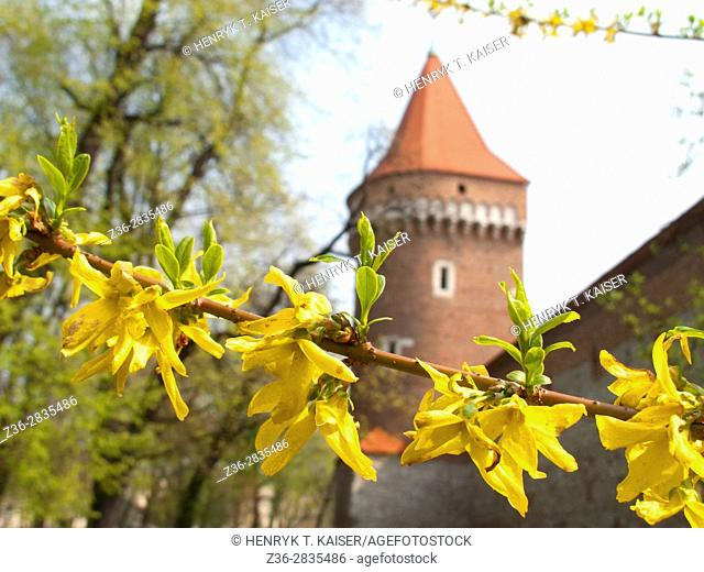 Tower with medieval wall and Planty Park at early spring, Krakow, Poland