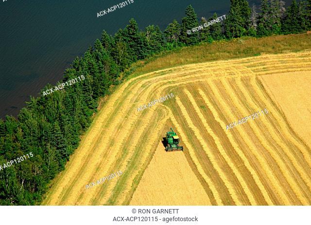aerial, combine, harvesting, Alberton, PEI
