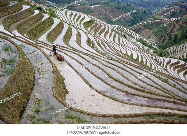 China. Guangxi Province. Guilin. Longsheng terraced ricefields