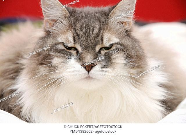 Female cat with eyes squinting
