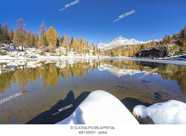 Red larches frame the frozen Lake Mufule Malenco Valley province of Sondrio Valtellina Italy Europe
