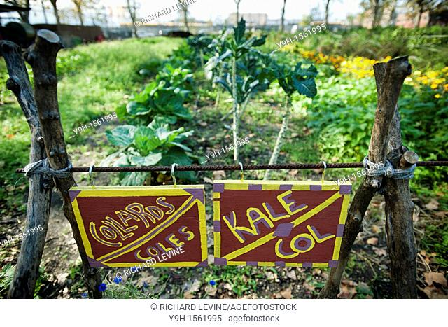 Bilingual signs mark the rows of collards and kale growing at the Red Hook Community Farm in Brooklyn in New York The farm is located on a city block in the Red...