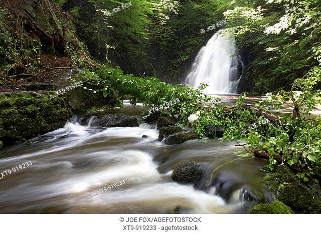 tree fallen as a result of soil erosion and heavy rainfall into the river at the Gleno or Glenoe Waterfall beauty spot county antrim northern ireland uk