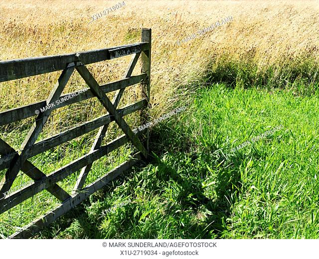 Gate into a Meadow of LOng Grass near Studley Roger Ripon North Yorkshire England