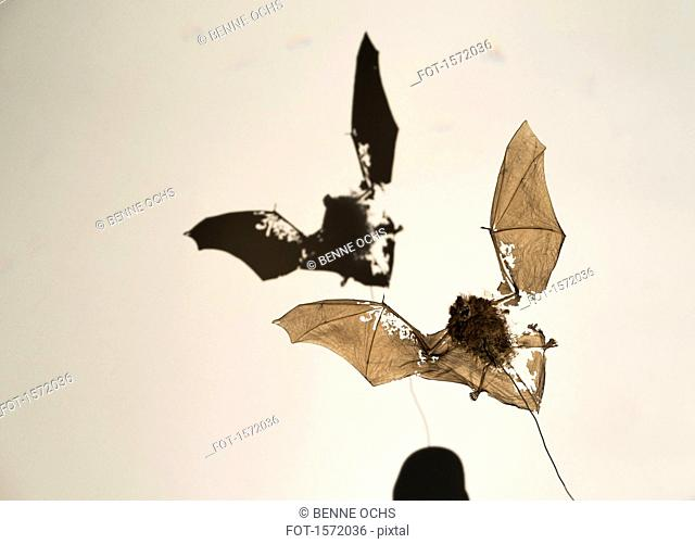 Bat fossil with shadow against white background