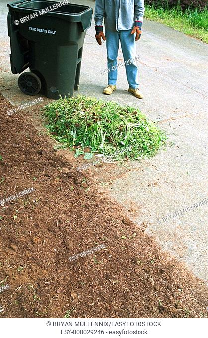 36 year old man pulling weeds in front yard of house