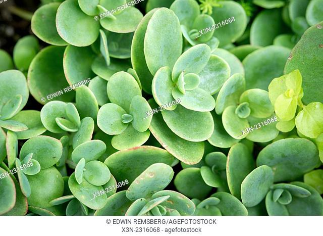 Close-up of succulent plants in Fallston, Maryland, USA