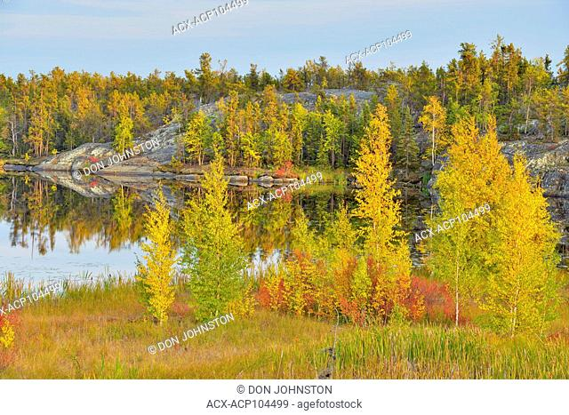 Early autumn colour in aspen, larch, and dwarf birch, Yellowknife, Northwest Territories, Canada