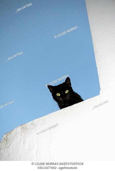 Black cat with green eyes shares down from the top of a whitewashed wall in the picturesque village of Vejer de la Frontera