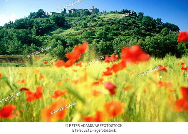 Castelnuovo dell'Abate. Montalcino. Tuscany. Italy