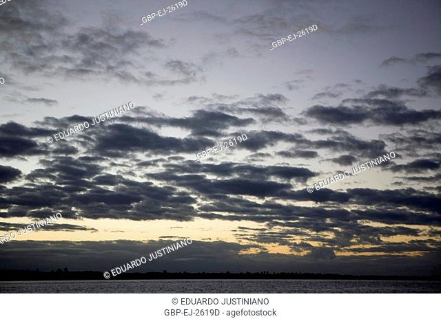 To get late in a Planície Intertidal, Growth of mangroves, Canavieiras, Bahia, Brazil