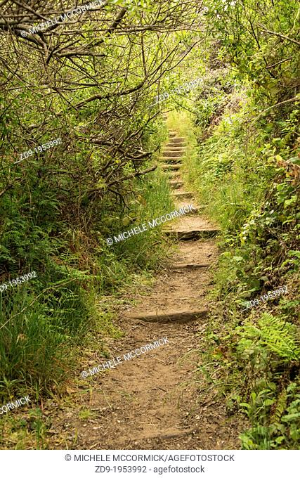 A narrow stepped path leads into the forest