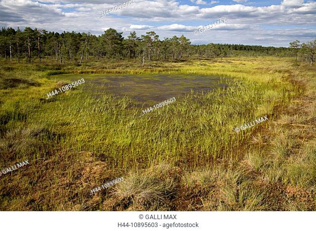 Baltic States, Estonia, Europe, national park, nature, Soomaa-national park