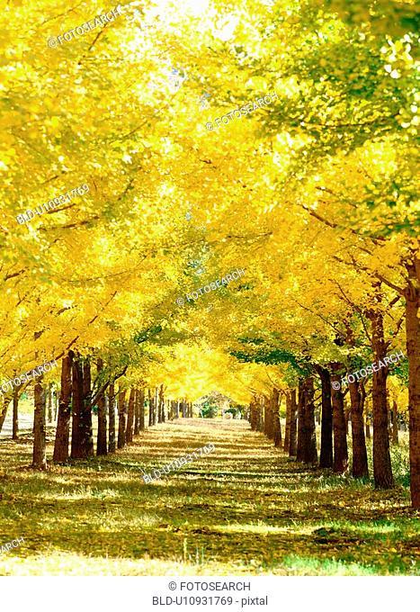 plant, nature, park, tree, road, film