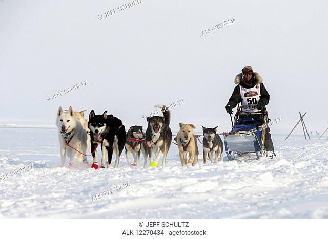 Marcelle Fressineau on the trail a few miles from the Nome finish line passes tripod trail markers during the 2014 Iditarod Sled Dog Race
