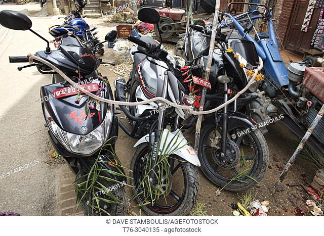 Motorcycles covered with intestines during the Dasain holiday in which thousands of animals are slaughtered, Kathmandu, Nepal