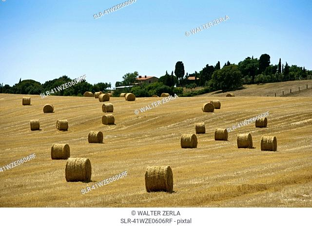 Hay bales in rural crop field