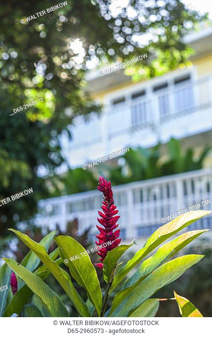 U. S. Virgin Islands, St. Thomas, St. Peter, Heliconia