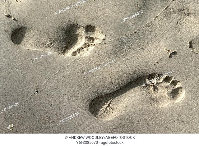 Footprints in the sand, tropical island, Ko Pha Ngan, Thailand