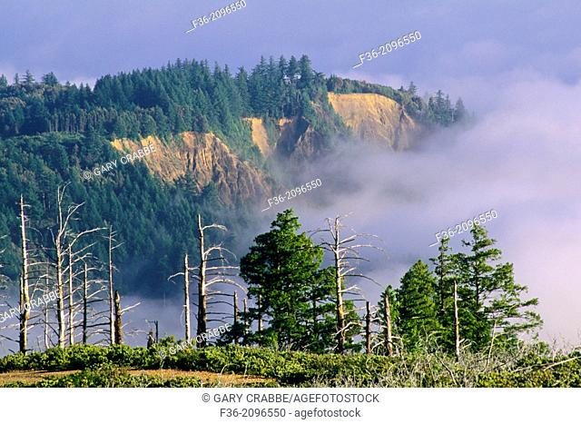 Fog rolls in over coastal hills of the Lost Coast, near Shelter Cove, Humboldt County, CALIFORNIA
