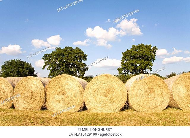 Hay and straw are cut and baled at the end of the summer when the crop has ripened and been harvested