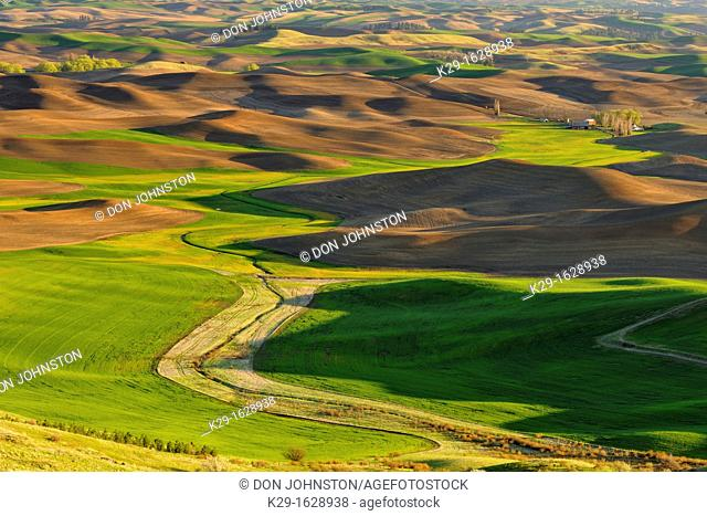Palouse farmland in evening light in springtime, Steptoe Butte State Park, Washington, USA