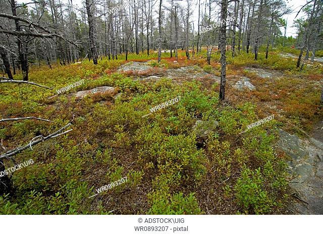 Jack Pine Trail, Cape Breton Highlands National Park, Nova Scotia, Canada