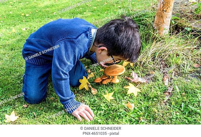 Six-year-old boy observing mushrooms in the forest