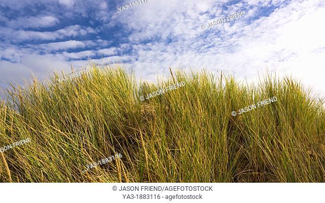 England, Lancashire, Lytham St Annes  Sand dunes on the Lytham St Annes coast near Blackpool