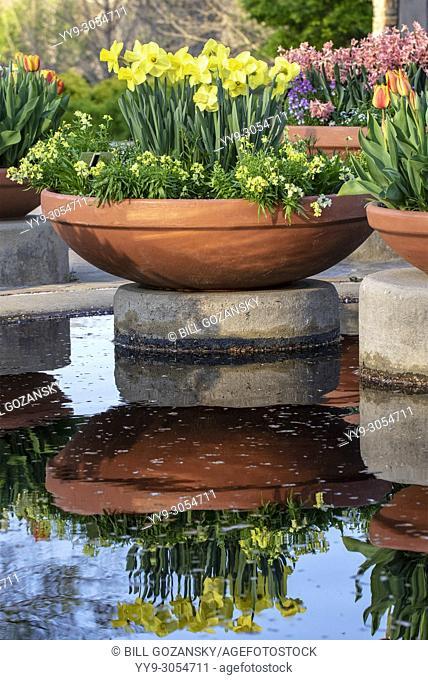 Flower reflections at North Carolina Arboretum, Asheville, North Carolina, USA