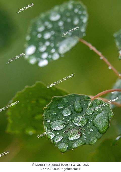 Rain drops over leaf. Montseny Natural Park. Barcelona province, Catalonia, Spain