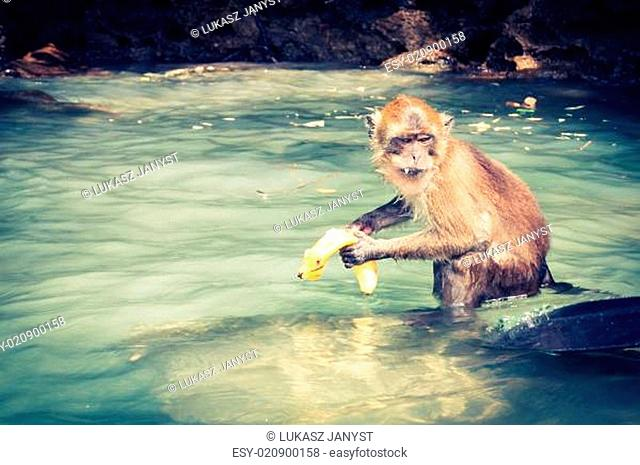 monkey from Monkey Beach in Thailand