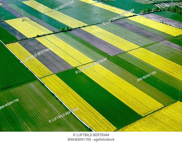 corn fields and rape fields, Germany, Bavaria, Unterfoehring