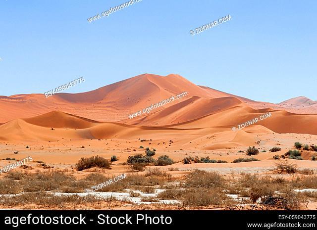 Duenen mit Akazien in der Namib Wueste, Namibia, Afrika