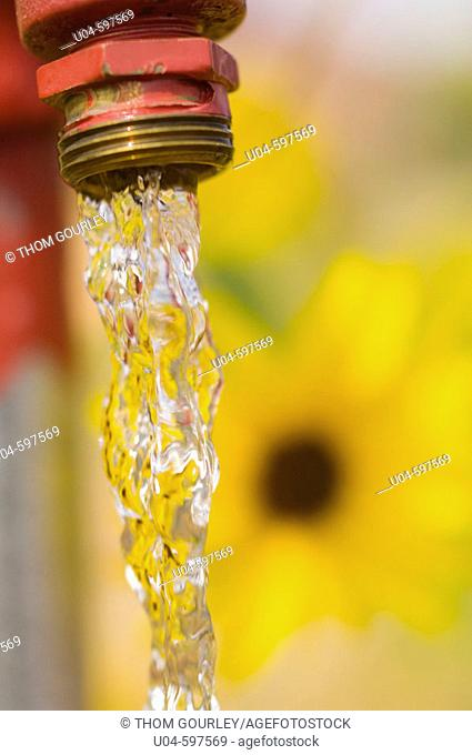 Water flowing from hydrant with sunflower