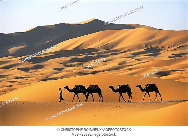 Camel train. Merzouga sand dunes. Erfoud region. Morocco
