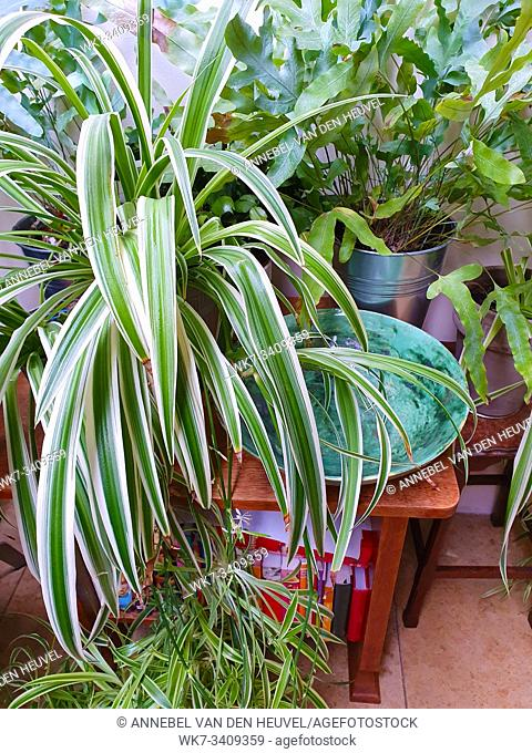 Various house plants close-up, home gardening collection green