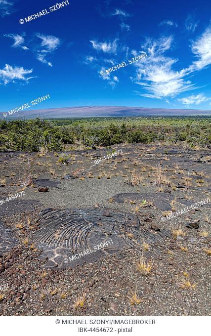 Pahoehoe lava from Kilauea volcano eruptions, with Mauna Loa volcano in the background, Ka'u Desert, Hawai'i Volcanoes National Park, Big Island of Hawai'i, USA