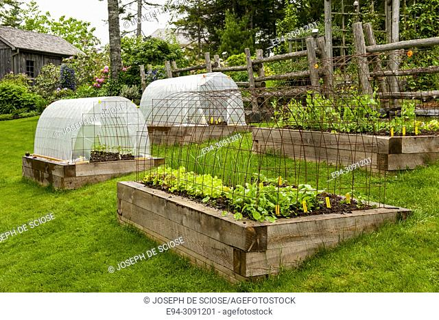 Raised vegetable and herb garden beds on a slope in a lawn in a backyard, showing wire hoops for cover support, Nova Scotia, Canada