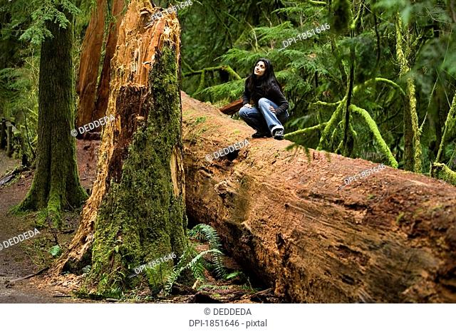 Cathedral Grove, MacMillan Provincial Park, Vancouver Island, British Columbia, Canada, Woman sitting on a fallen tree