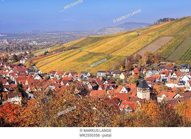 Struempfelbach, vineyards in autumn, Rems Murr District, Baden-Wurttemberg, Germany, Europe
