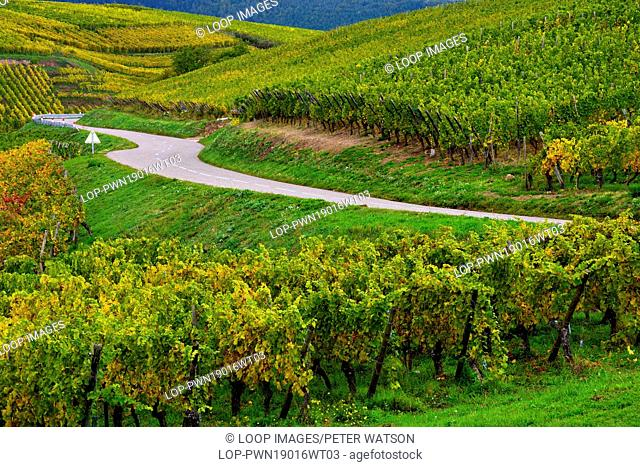 An autumn view of Alsace vineyards after the grapes have been harvested