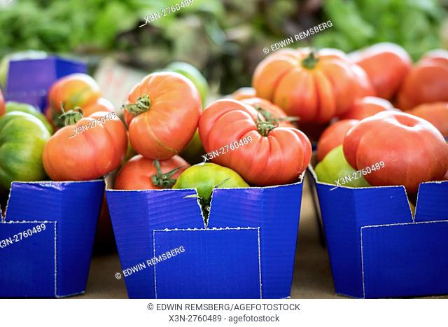 Rome, Italy- Cartons of tomatoes for sale in Campo de' Fiori, the largest and oldest outdoor market in Rome. It is located south of Piazza Navona