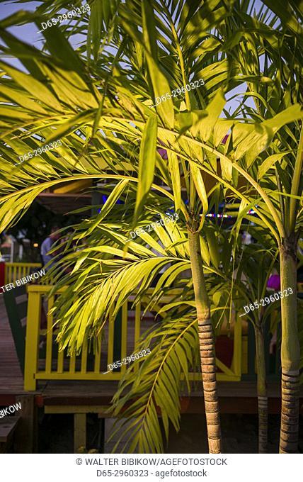 St. Kitts and Nevis, Nevis, Pinneys Beach, palm trees