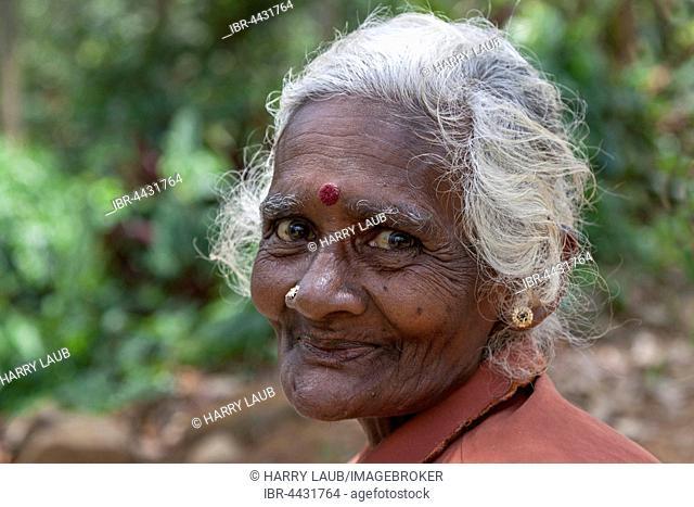 Old native woman, tea picker, near Nuwara Eliya, Central Province, Sri Lanka